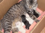 Tiger Lily and the Five Kittens