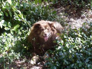 Hershey in Springtime